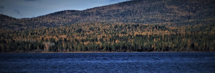 Lake Mary Ronan_Larch_Oct_2018 v.jpg