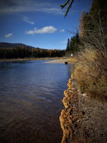 Lake shore larch
