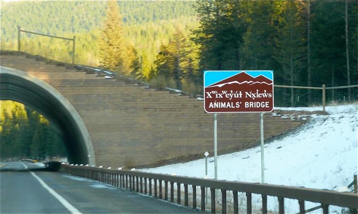 animals_bridge_flathead_reservation