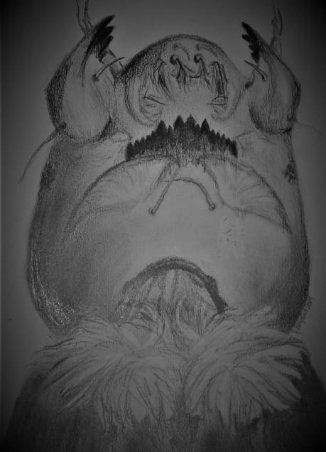 Polypedilum