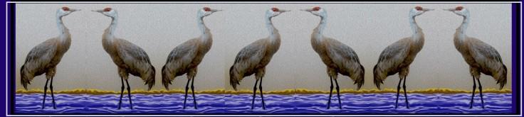 Tethysphere birds